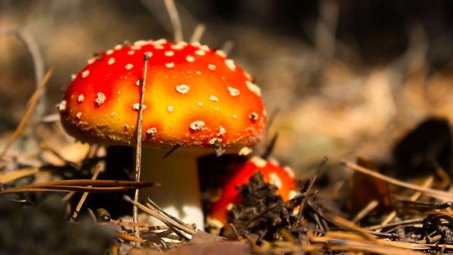 Innovativ: Strom aus Pilzen